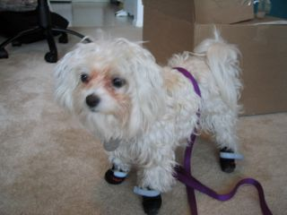 Muffin In Boots