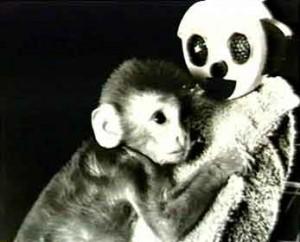 harlow monkey